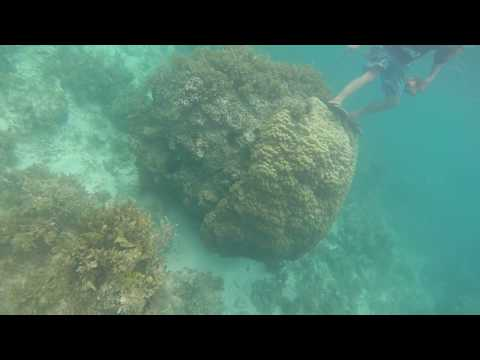 Bohol 2017 05-04@0800 Loon Basdacu Deep Sea  Fishes