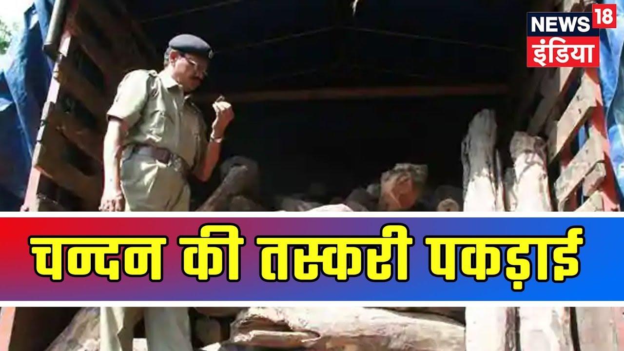 Aaj Ki Taaza Khabar | Mumbai Police Exposes A Sandal Smuggling Gang, Recovers 500 Kg Of Sandal Logs