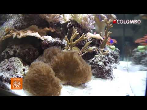 Colombo Live Phytoplankton