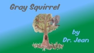 Gray Squirrel by Dr  Jean