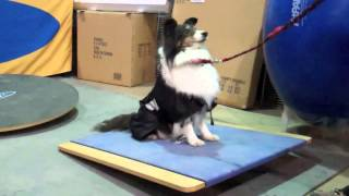 Fitpaws® Equipment For Canine Fitness