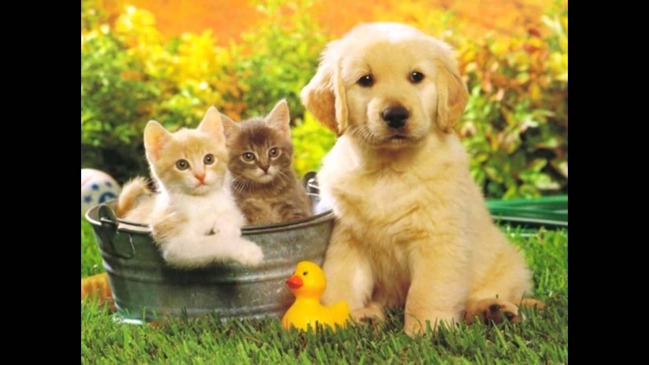 Un amico cos laura pausini youtube for Repulsif chien et chat exterieur