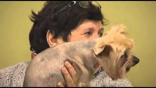 В Тюмени и окрестностях участились случаи отравления и гибели собак