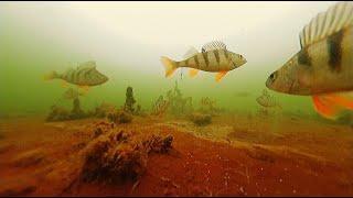 Ловля Окуня на Безмотылку Подводная Съемка