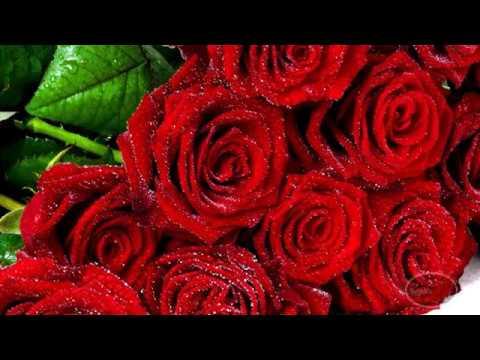 En Güzel Kırmızı Güller