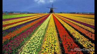 Нидерланды (Голландия )эмиграция ПМЖ...