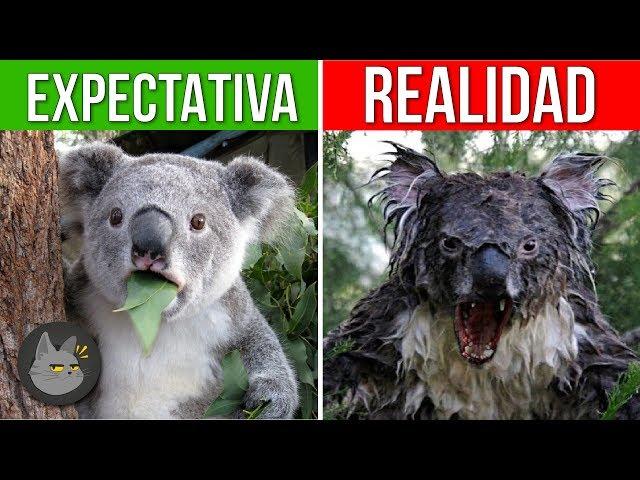 10 ANIMALES QUE SON MÁS PELIGROSOS DE LO QUE PIENSAS