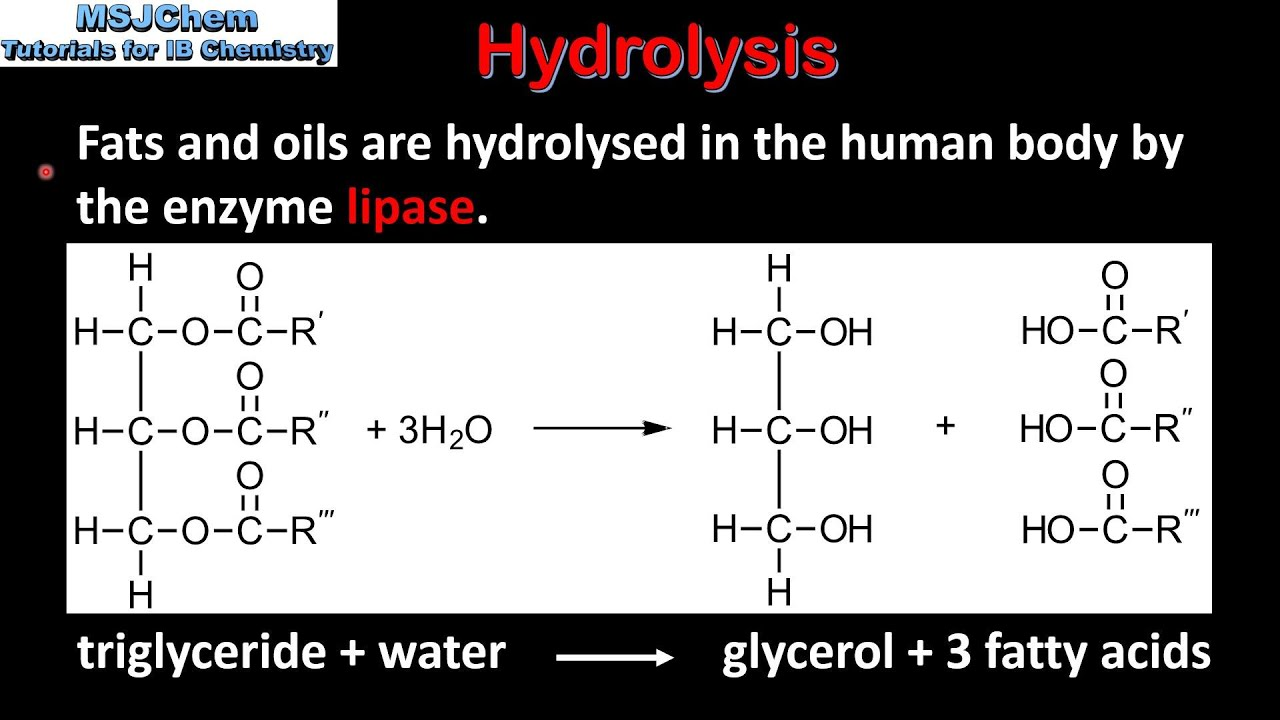 why are triglycerides phospholipids and steroids grouped together