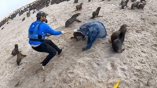 Каякер спасает морского котика из сетей