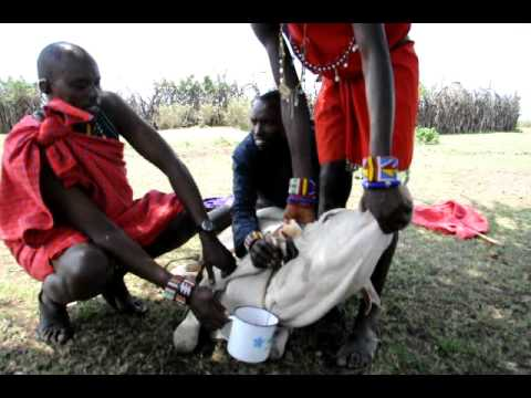 A Day In The Life Of A Massai