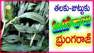 హెర్బల్ చిట్కా-మన పొలాలలో కలుపు మొక్క-కుంతల వర్ధన-Wonderful Medicine-chitka channel