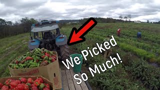 A Day in the life of a Vegetable Farmer (Farm vlog #2)