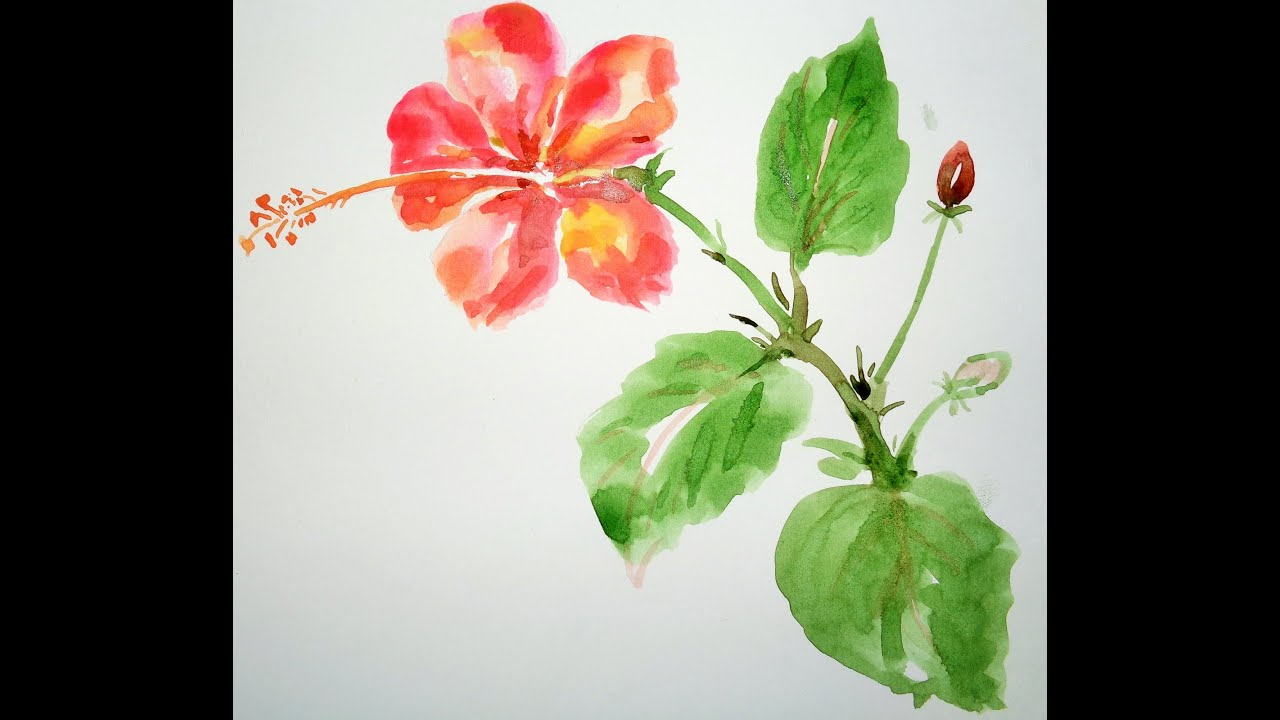 How To Draw Flowers - Draw A Hibiscus Flower - YouTube