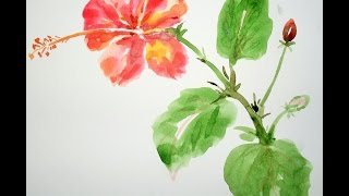 How To Draw Flowers - Draw A Hibiscus Flower