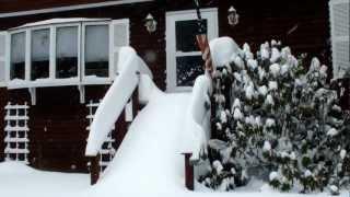 Skye Terrier's First Snowstorm