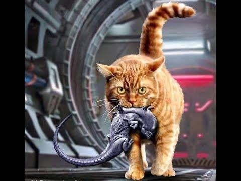 про котов и кошек с юмором и позитивом!