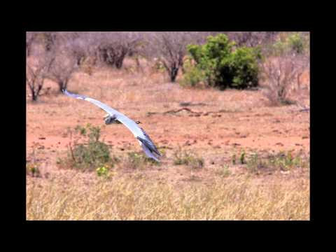 A few birds seen in SA parks 2013