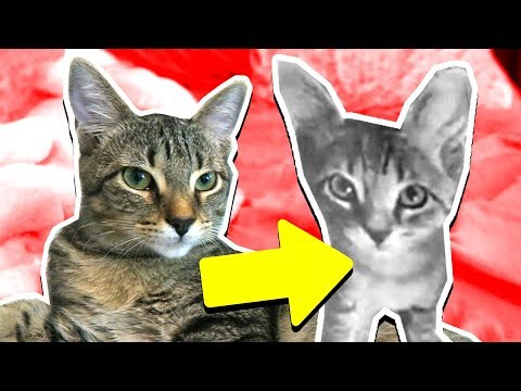 DUDE THE CAT'S GROWTH REACTION! *KITTEN TO CAT*