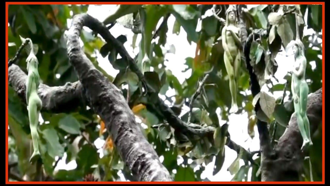 Narilatha – Árbol que da frutos en forma de mujer - YouTube