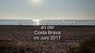 Camping La Ballena Alegre 2017