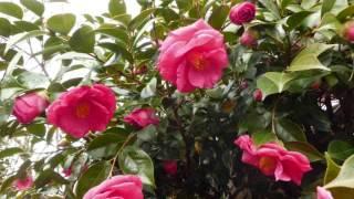 花は咲く.