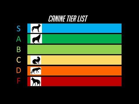 The Dog Tier List