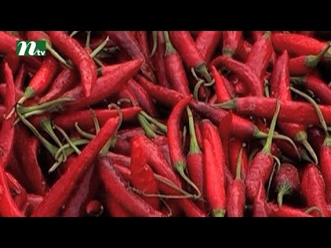 Bumper production of pepper in Bogra | News & Current Affairs