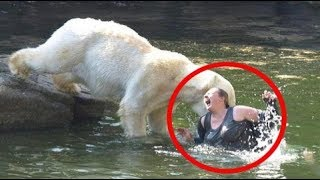 Stupid Humans vs Smart Wild Animals - Most Amazing Wild Animal Attacks