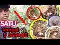 Wow Panen Sarang Burung Di Alam Liar  Mp3 - Mp4 Download