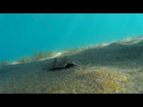 Die Flunder (Plattfisch) - Gran Canaria 2015 - SJ4000
