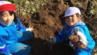 食農教育 畑の授業!糠の目小学校×高畠青年部♫〜サツマイモ掘り編〜