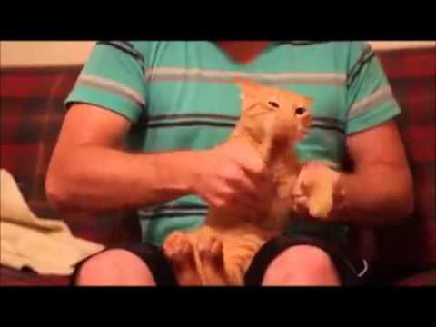 Cani e gatti che ballano youtube for Youtube cani e gatti