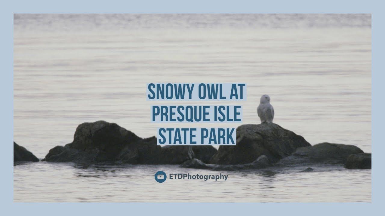 Nikon Z6 Test Video: Snowy Owl At PISP — ETDPhotography