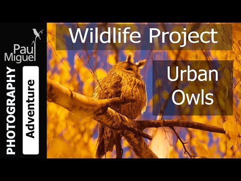 Photographing Wild Owls at Night - in Serbia