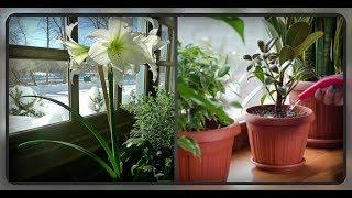 Вы должны это знать.. Как сохранить комнатные растения зимой??  Секреты ухода в зимний период..