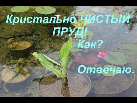 Вопрос: Какие животные участвуют в самоочистке воды в водных экосистемах?