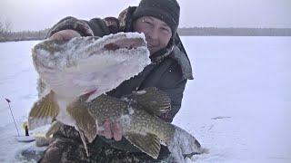 Зимняя Рыбалка на Хищника Самая Тяжёлая и Не удачная Первый Трофей Сезона 2020 2021 Взят