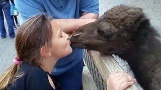 Epic drôles Les enfants et les animaux de compagnie ne réussit pas - rions plus dur que jamais!