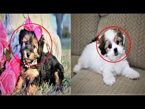 Top 5 Cutest Hybrid Dog Breeds - Best Five Cutest Hybrid Dog in the World