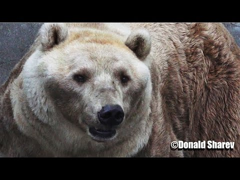 Africa Zoo - Stunning beautiful teddy bear with funny ears 4K