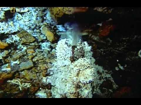 Тайны морских глубин.