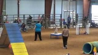 Australian Cattle Dog Akc Dog Agility~ Standard