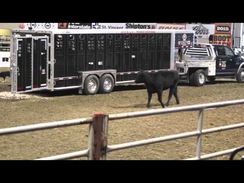 Stock Dog Low-Stress Cattle Handling NILE 2015
