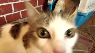 Новая кошка!