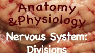 Nervous System : Divisions of the Nervous System (10:09)