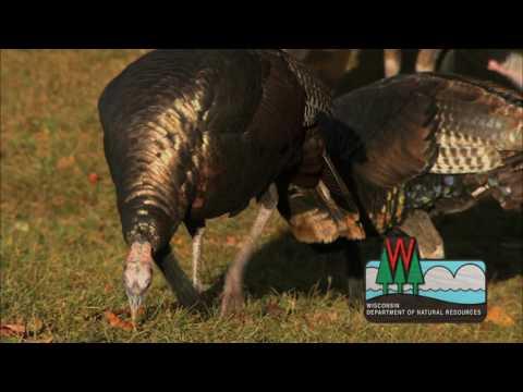 Learn To Hunt Turkey