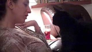 Cat Mush