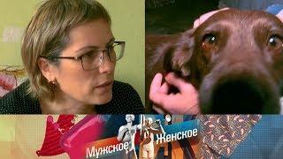 Собачья жизнь. Мужское / Женское. Выпуск от 11.09.2019