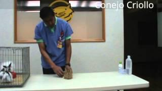 Cuidados de las mascotas: Veterinario de +KOTA nos habla sobre razas de conejos.
