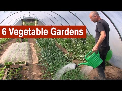 6 Vegetable Gardens